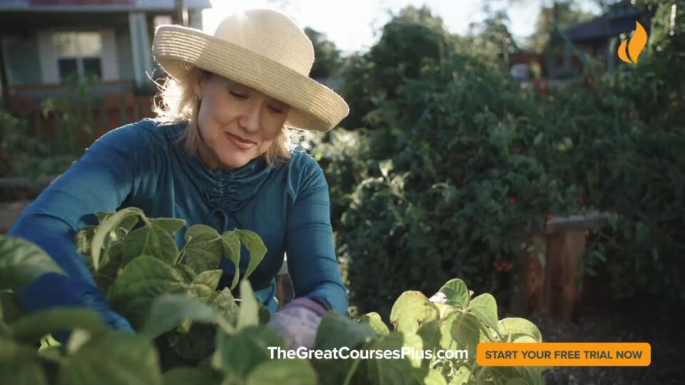 The Great Courses Plus UK TV advert